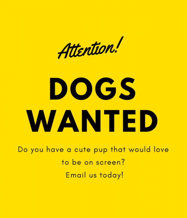 Dogs and Handlers Wanted!